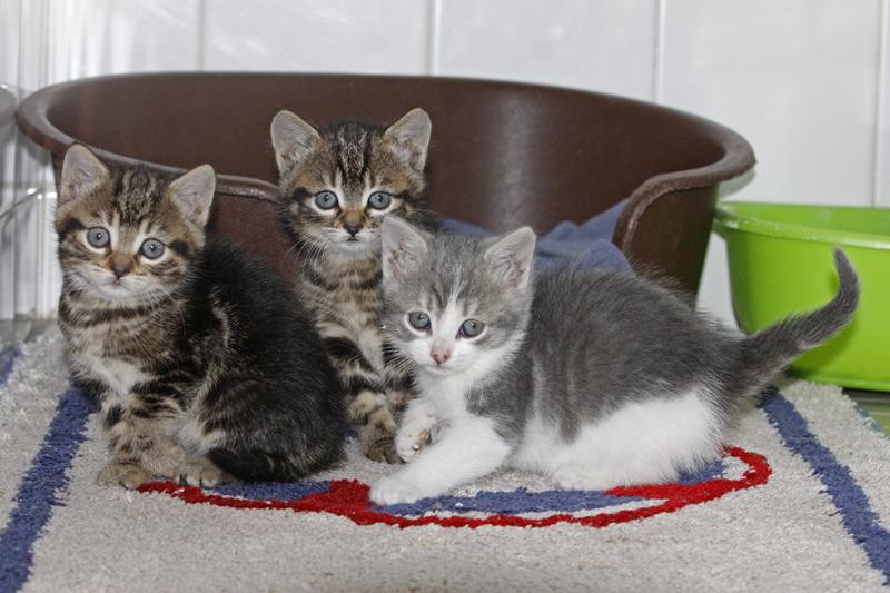 d38be009c5f98 Si vous aimez les chats, évitez leur cela ! - SPA de Bergerac